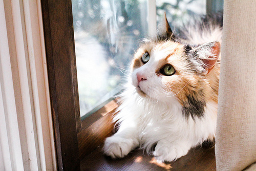 calico, cat, and kitty image