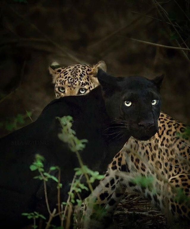 animals and naturaleza image
