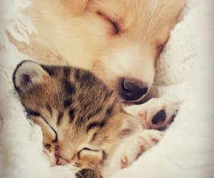 baby animals, cats, and dogs image