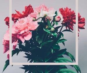 Image by Johanna