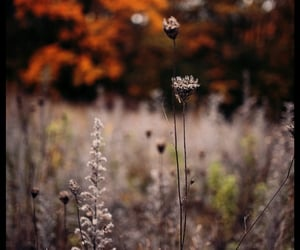 autumn, cloudy, and flowers image