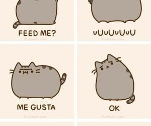 cat, meme, and pusheen image