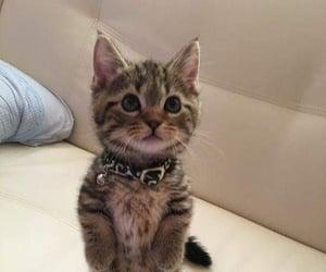 animals, beautiful, and cat image