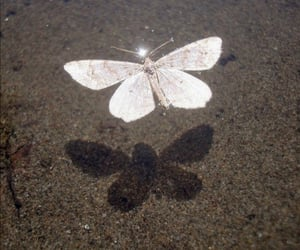 butterfly, white, and aesthetic image