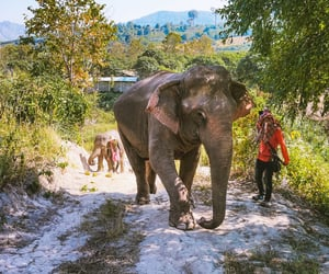 elephants, thailand, and animal image