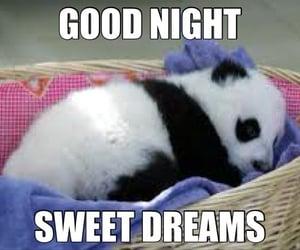 good night, sweet dreams, and good night sweet dreams image