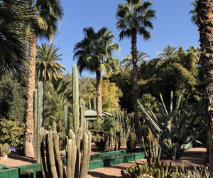 jardin, maroc, and marrakech image