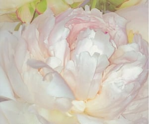 flowers, peony, and pale image