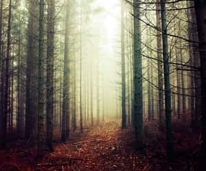 autumn, foggy, and high quality image
