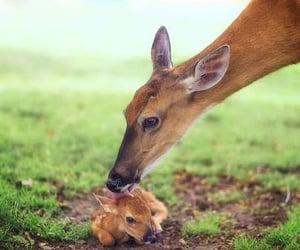 animal, deer, and animals image