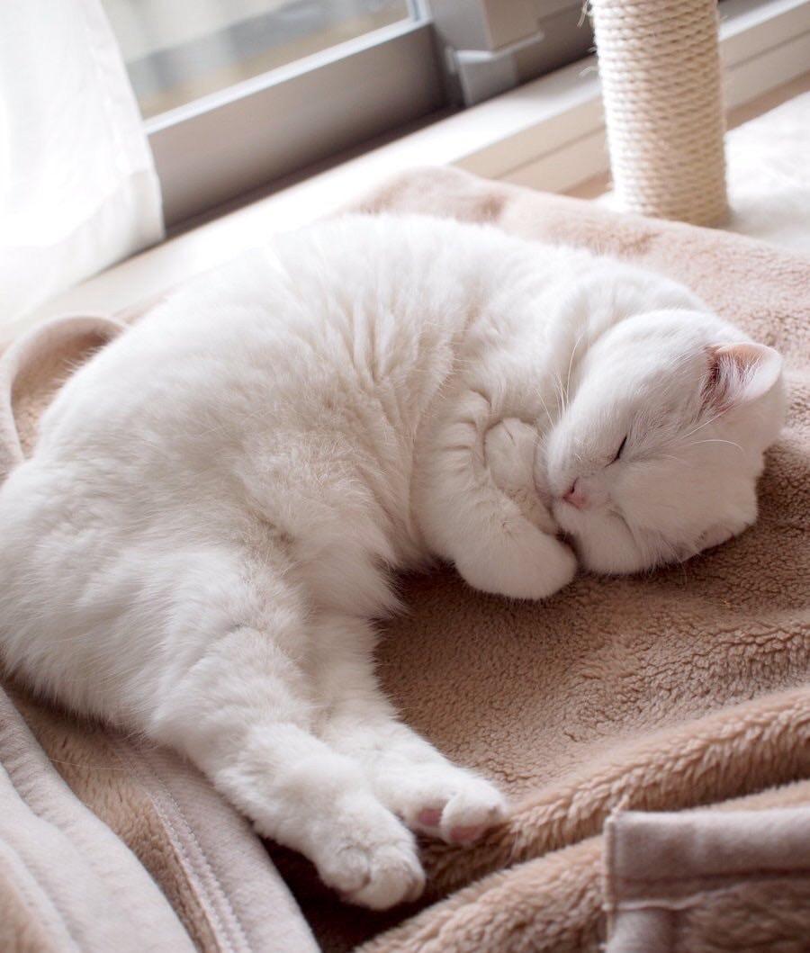 Спящие коты картинка