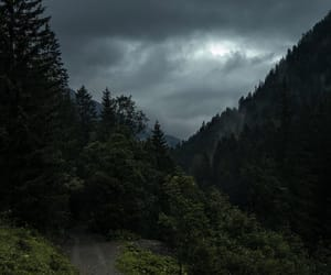 forest, sky, and nature image