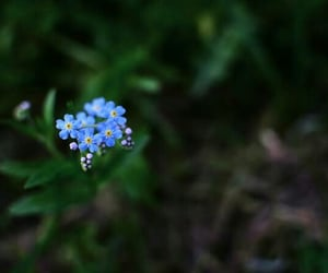 blues, forgetmenot, and cute image
