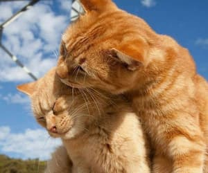 animals, kiss, and cat image
