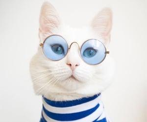 Animais, gato, and animal image