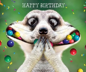 birthday, animals, and colours image