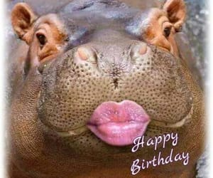 animals, colours, and birthday image