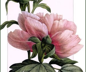 flower, pink, and realistic image
