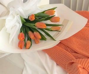 flowers, orange, and tulips image