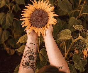 sunflower, tattoo, and flowers image
