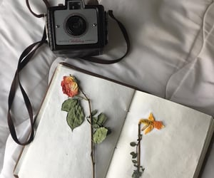 aesthetic, camera, and floral image