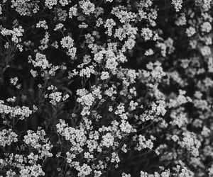black&white, flowers, and small image