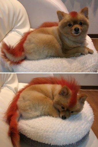dog, firefox, and animal image