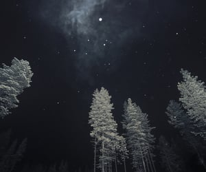 beautiful, forest, and night image