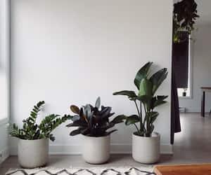 haus, pflanzen, and gemütlichkeit image