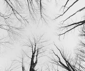 tree, black and white, and sky image