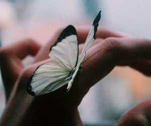 butterfly, animal, and hand image
