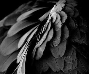 wings, black, and aesthetic image