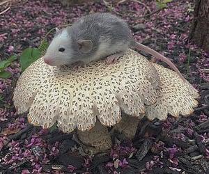 aesthetic, kawaii, and rat image