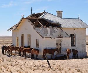 feral horses image