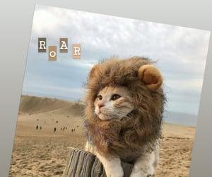 cat, roar, and instagram image
