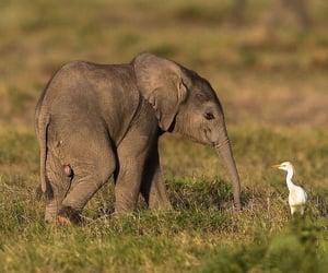 animal, bird, and nature image