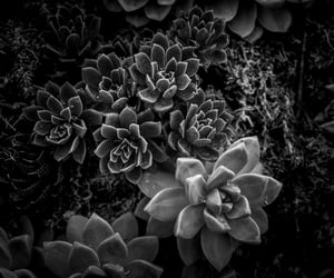 b&w, black and white, and contrast image