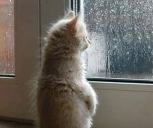 cat, cute, and rain image