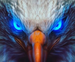bald eagle and raptor image