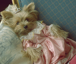dog, dress, and cute image