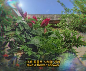 aesthetic, soft, and flower shower image