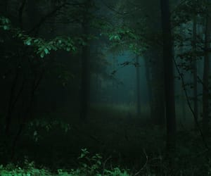 forest, tree, and Darkness image