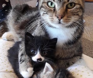 animals, cat, and family image