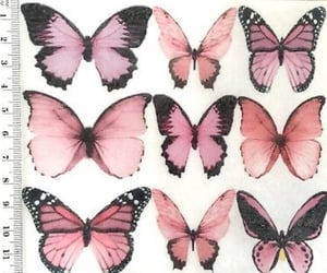 pink, butterfly, and theme image