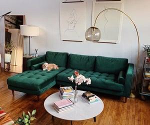 beautiful, comfortable, and dog image