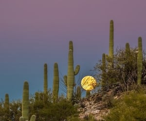 moon, cactus, and nature image