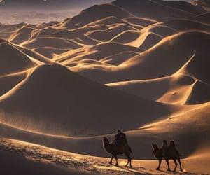 camel, desert, and Mongolian image