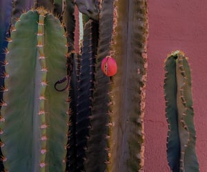 cacto, cactus, and pink green image