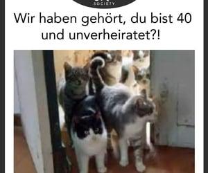 cat, deutsch, and kitty image
