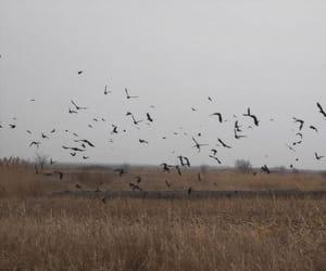 birds, february, and Flying image